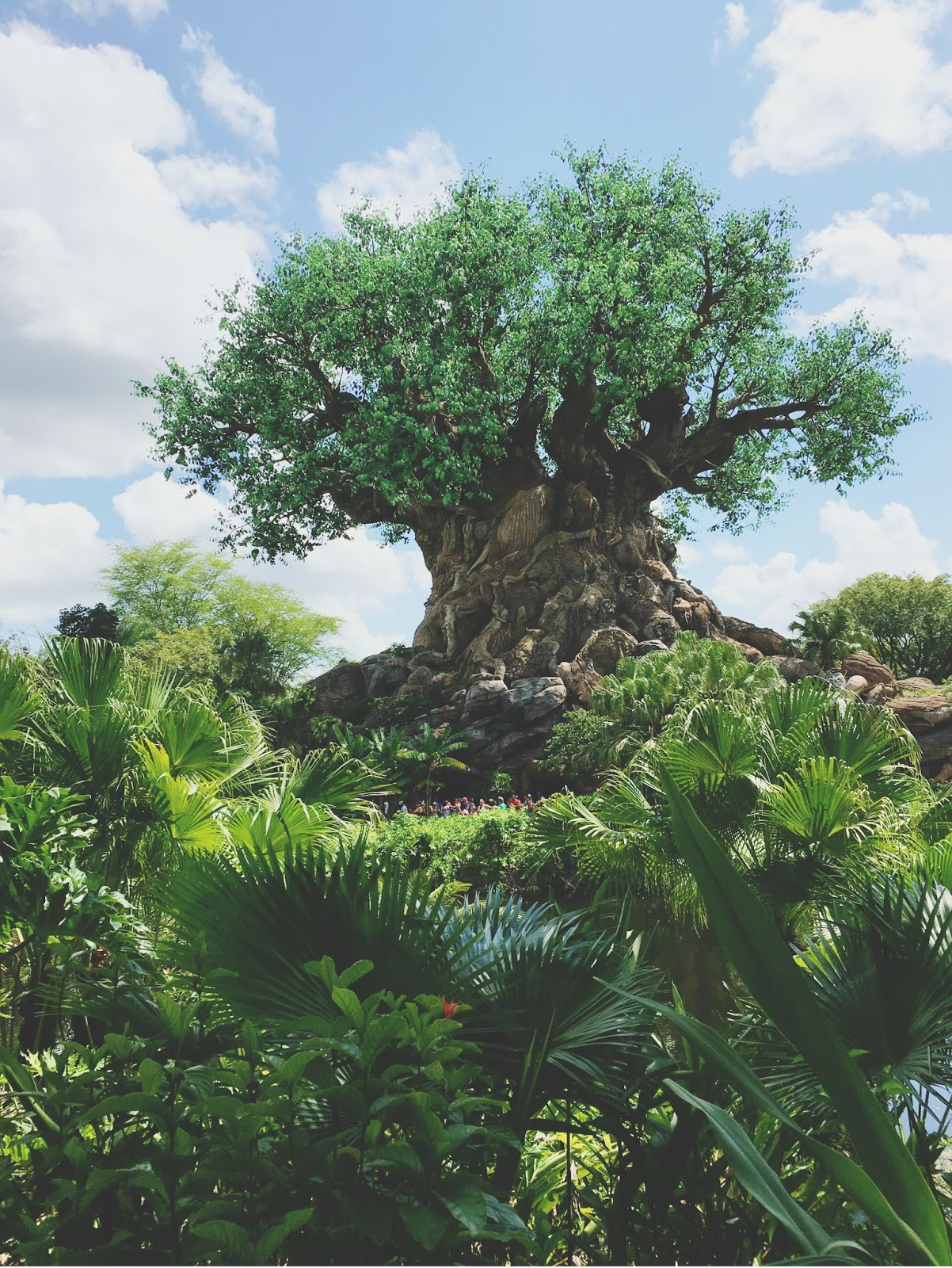 Tree of Life at Animal Kingdom in Disney World, Florida