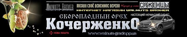 Саджанці горіха Кочерженко, 0985674877, 0957351986, купити Walnuts Broker