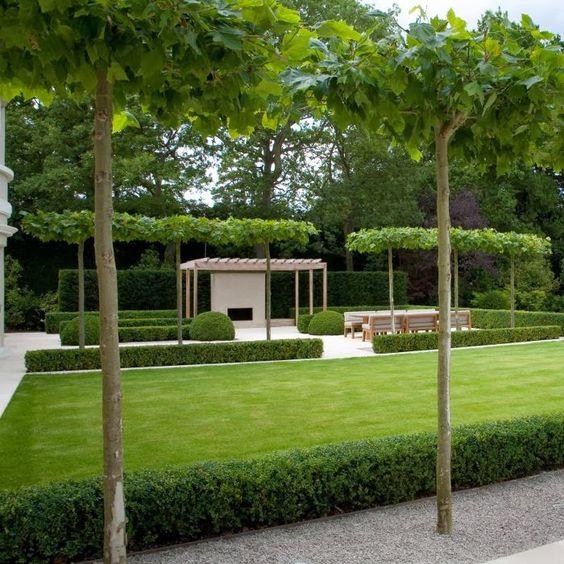 gradina aerisita, design modern linii drepte, gard viu crestere rapida, curte, arhitect peisagist bun, proiect