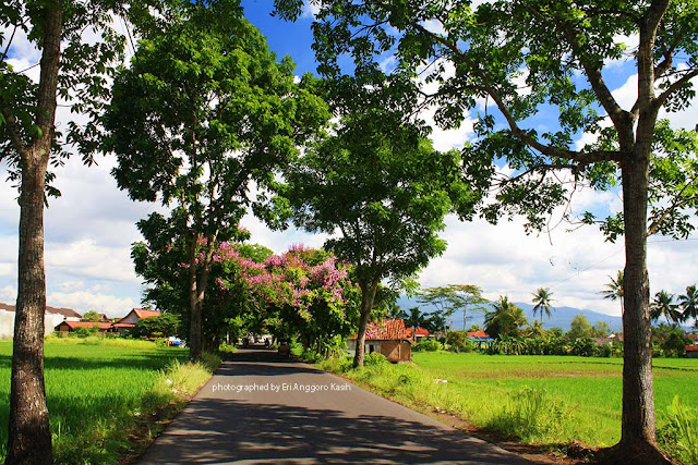 The Flowers Tunnel on Laswi Street in Tasikmalaya, West Java