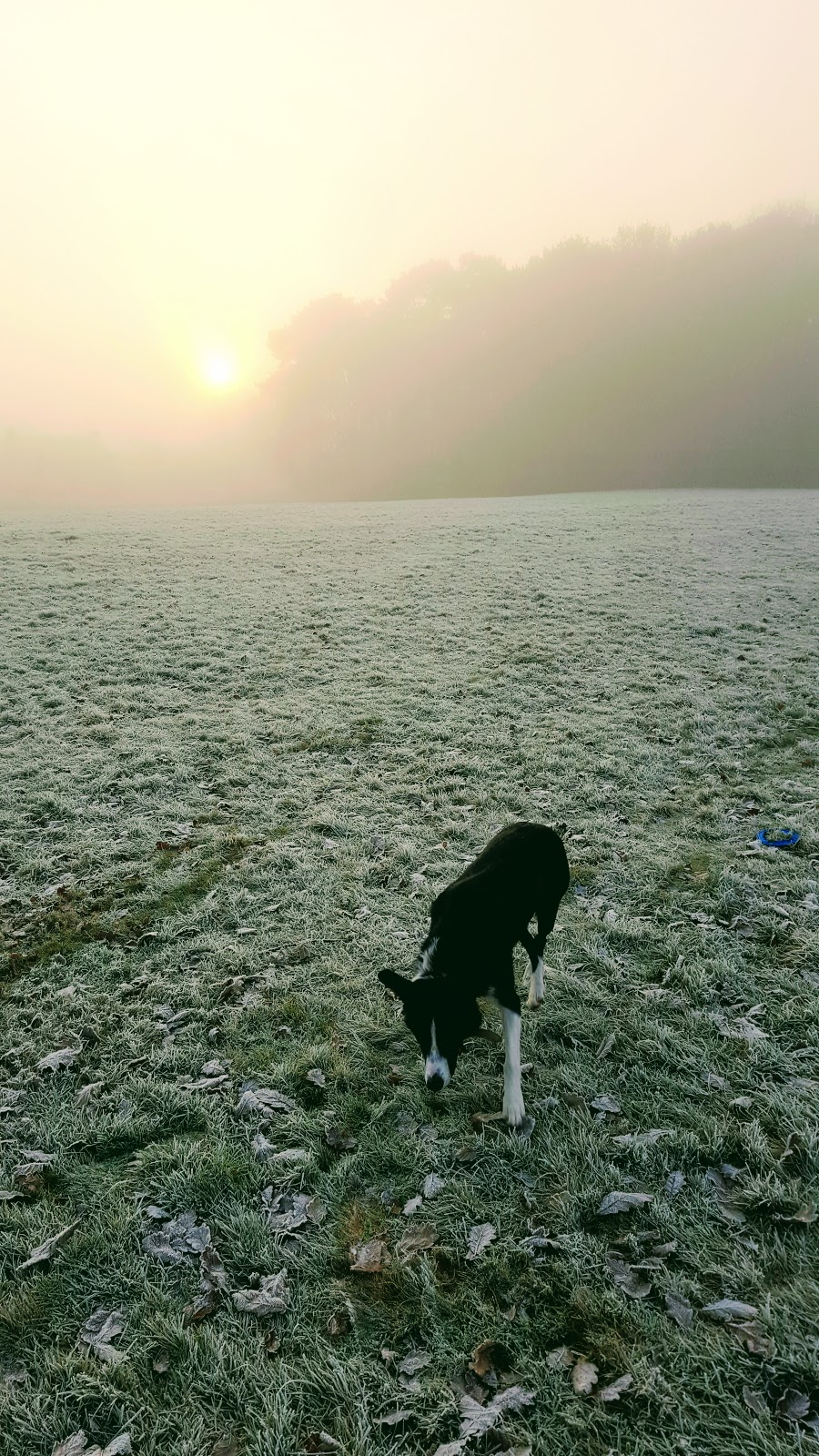 The dog with a blog post!!