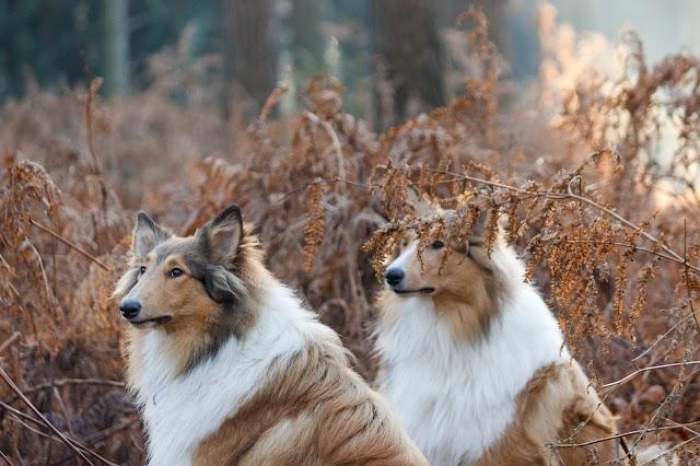 German Dog Breeds List 2019 - Top 12 Most Popular German Dogs