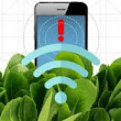'Bionic' spinach plants can detect explosives