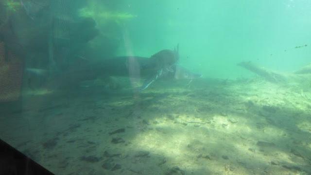 1gr8vacation pacific northwest oregon 39 s columbia river gorge for Bonneville fish hatchery