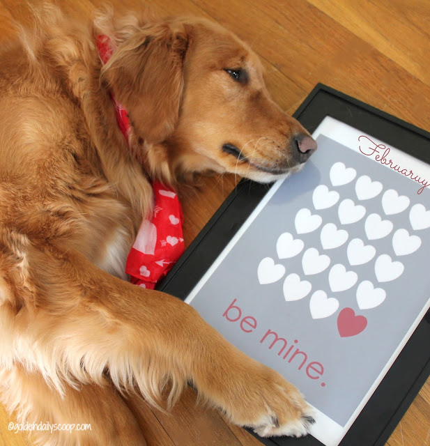 golden retriever valentine's day be mine #wordlesswednesday