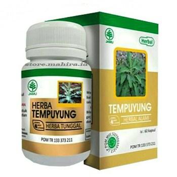 Herbal Tempuyung obat batu ginjal batu empedu