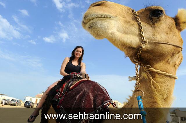 فوائد لحم الجمل، فوائد لحم الإبل، تفسير الجمل، الجمل، فوائد لحم الجمل للنساء، Benefits of camel meat, Benefits of camel meat, Interpretation of sentences, Camel, Benefits of camel meat for women