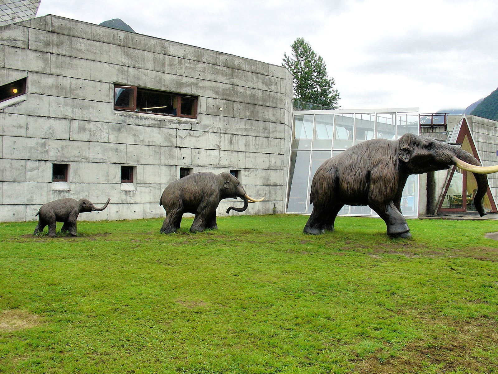 Being chased by mammoths at the Norsk BreMuseum.