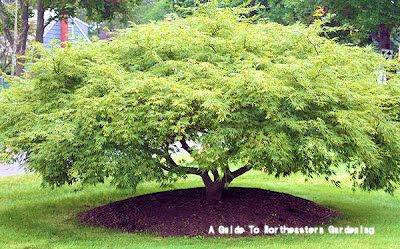 A GUIDE TO NORTHEASTERN GARDENING: Landscaping with ...