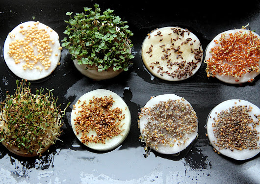 Grow Your Own Individual Cress Portions