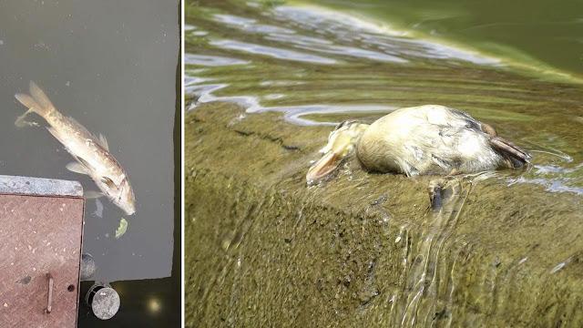 Animales muertos en el jardín botánico de Barakaldo