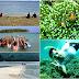 Wisata Bahari dan Wisata Edukasi di Pahawang The Hidden Paradise