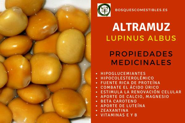 Altramuz (Lupinus albus), Propiedades hipoglucemiantes, hipocolesterolémico
