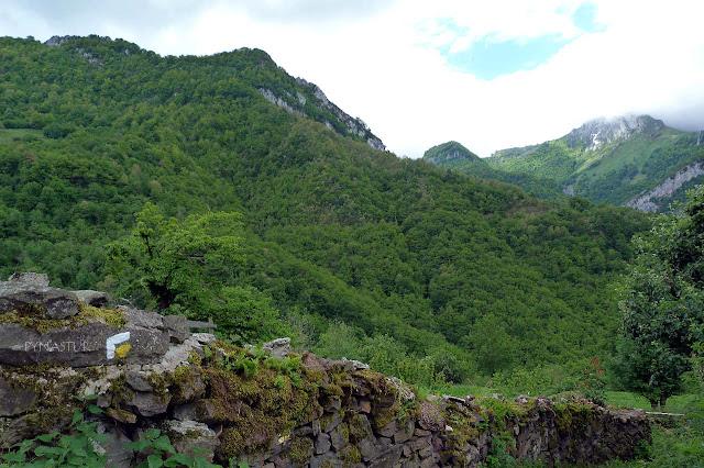 Bosque del Valle de Ponga