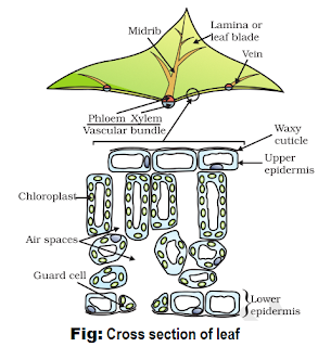 Notes of Ch 6 Life Process Part-I| Class 10th Science