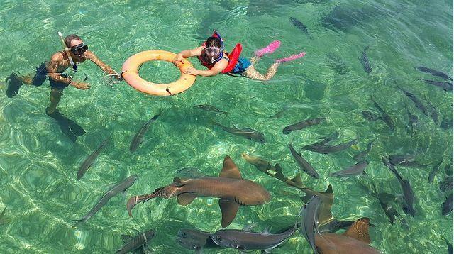 Shark Marine Park Belize, Best Vacation Spots For Couples
