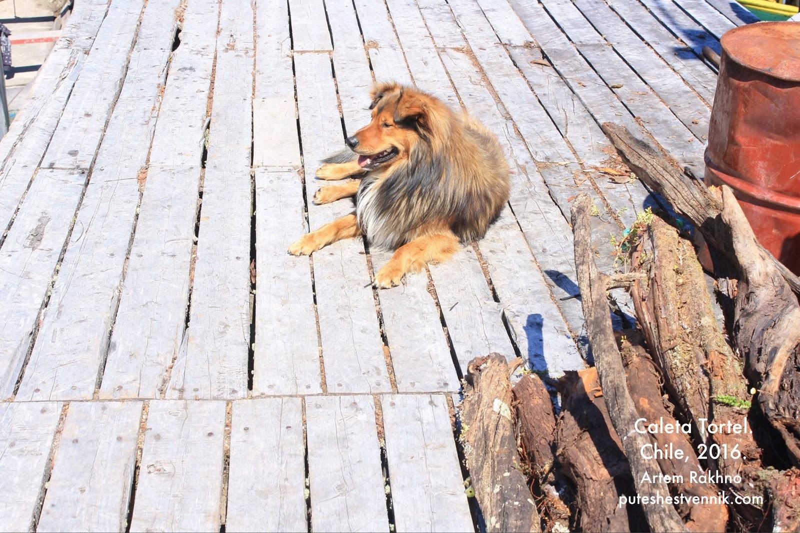 Собака на пристани в Калета Тортел