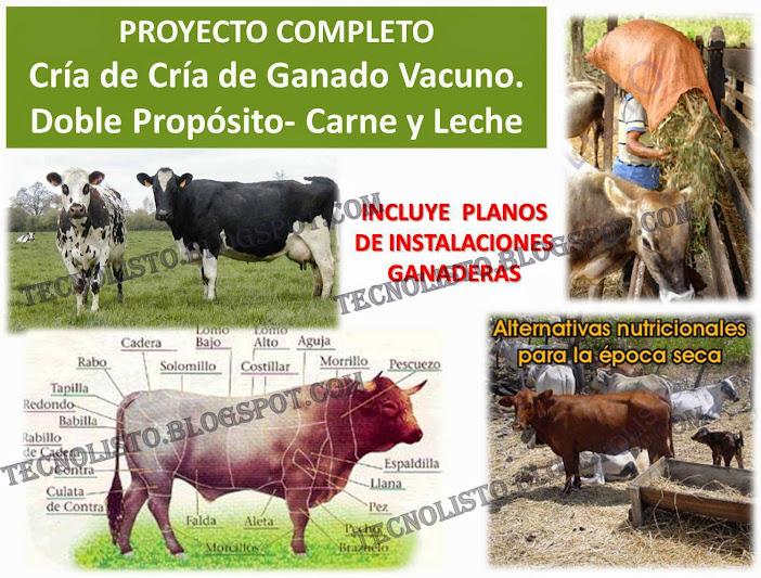 """""""Cria de ganado vacuno"""""""