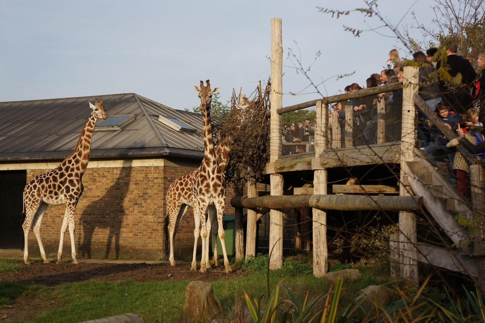 szl london zoo with toddlers giraffe feeding time