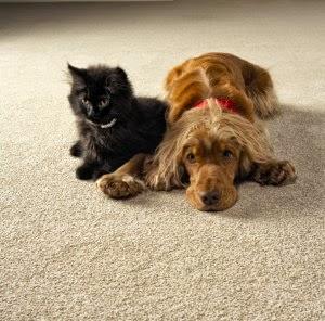 Americarpet: Best Carpet For Pet Owners