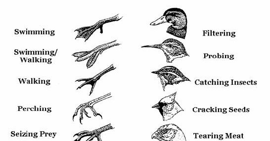 15 Minute Field Trips: Animal Adaptation: Build a Bird!