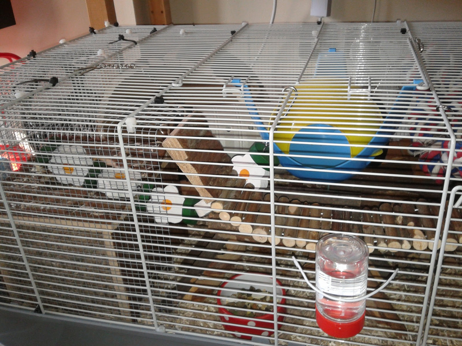 Unexpected Hamsters Cage Tours March