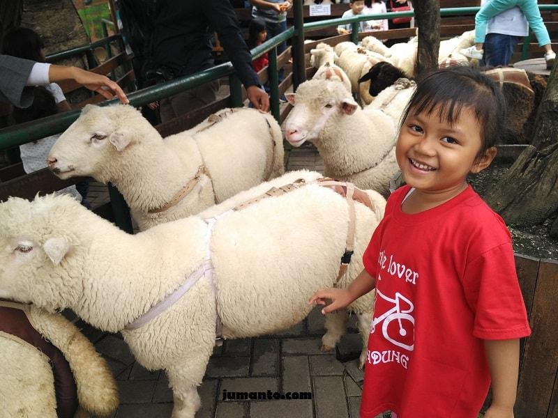 foto bareng domba di farmhouse lembang bandung