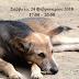 Ιωάννινα:Ημερίδα αύριο  Με Θέμα Τη Διαχείριση Των Αδέσποτων Ζώων & Της Κακοποίησης Των Ζώων Συντροφιάς