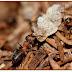 Essas formigas 'farmacêuticas' produzem uma poderosa mistura antimicrobiana para proteger a colônia