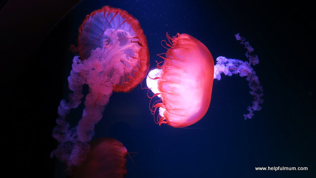 Jellyfish Blackpool