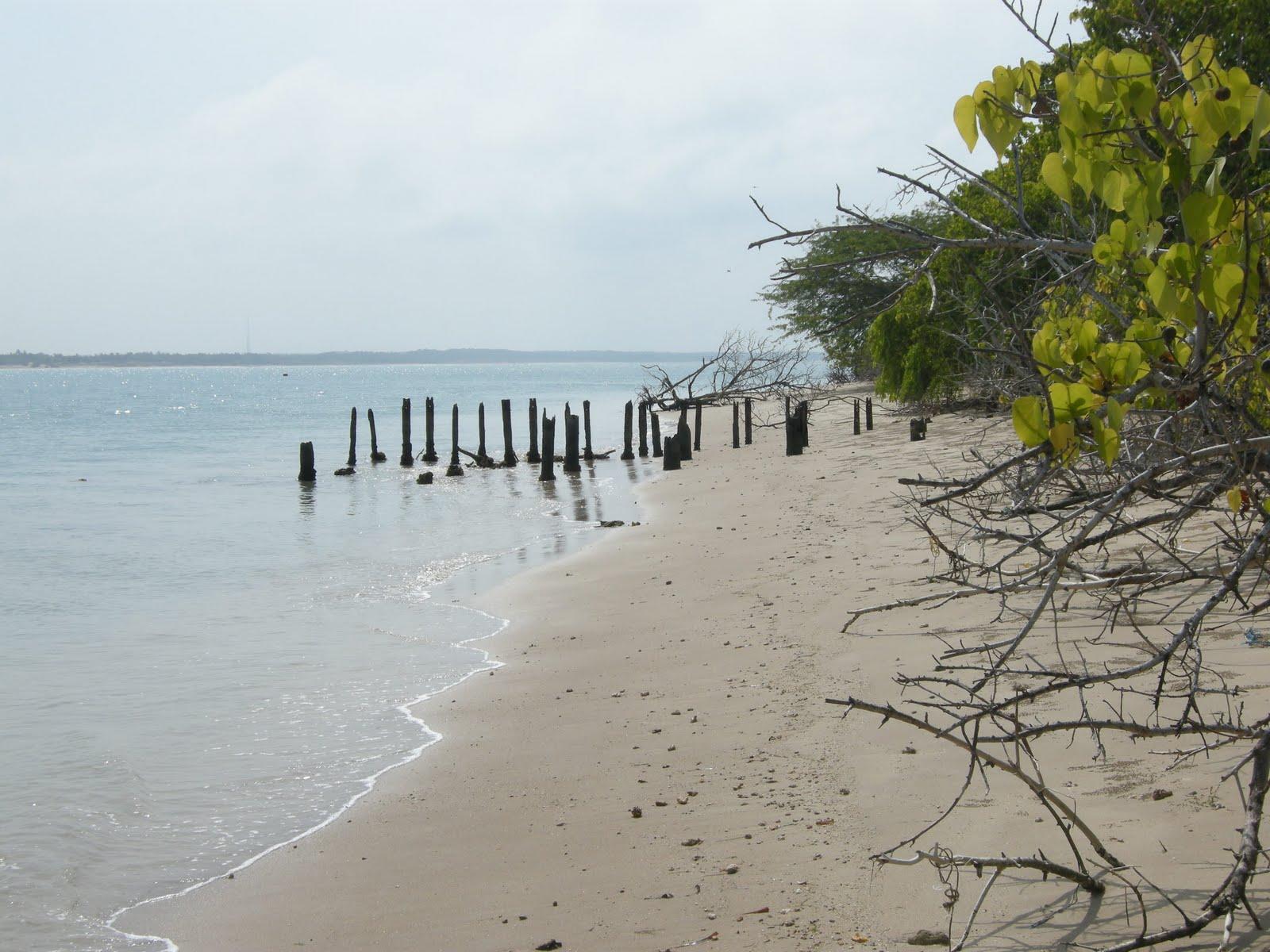 Image result for कुरूसादाई द्वीप rameshwaram