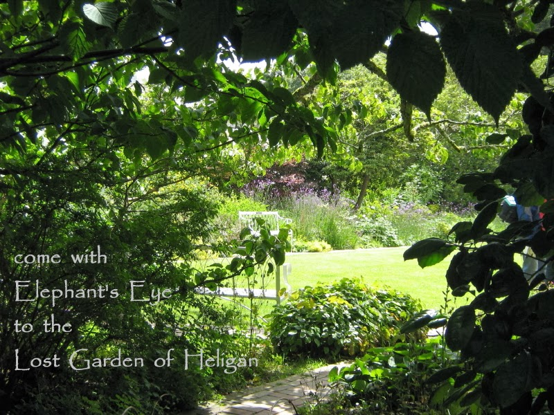 come with us to wander in the Lost Gardens of Heligan