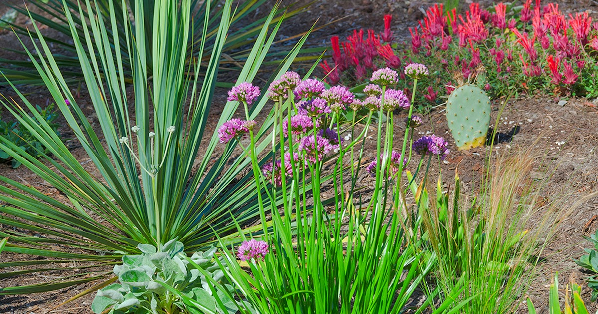 Linda Cochran 39 S Garden Dry Garden