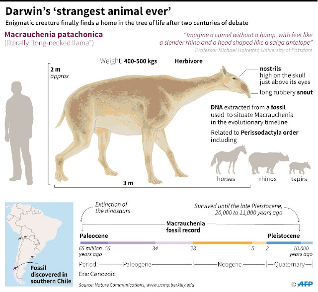 Darwin's 'strangest animal ever' finds a family