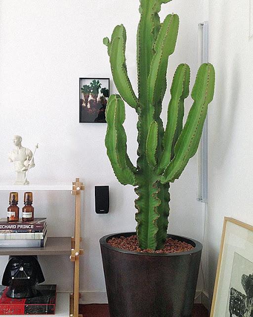 Pon un cactus en tu vida decoracion - Cactus de interior ...