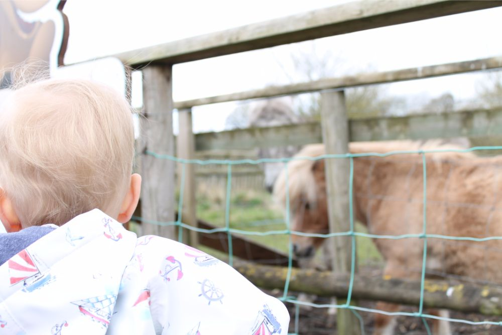 boy-looking-through-fence-at-horse