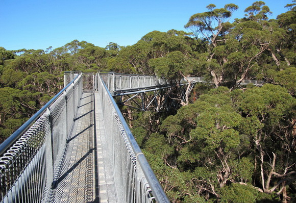 & Alizul: 10 AMAZING TREETOP WALKWAYS AROUND THE WORLD