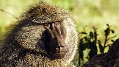 Serengeti 2019 Image 4