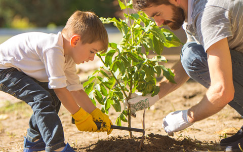 Tree planting and care by father and son