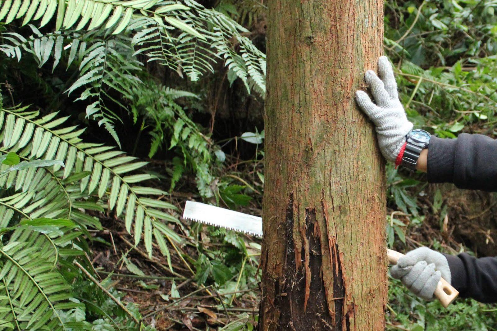 森林 伐採 影響