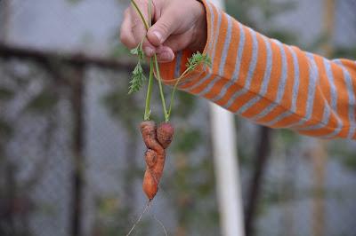 Влюбленные морковки