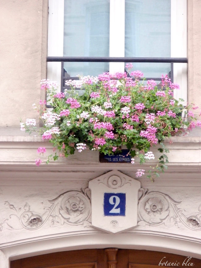 pink-geranium-windowbox-paris-window