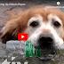 ΒΟΗΘΩΝΤΑΣ ΤΟ ΠΕΡΙΒΑΛΛΟΝ! Ο σκύλος που μαζεύει πλαστικά μπουκάλια
