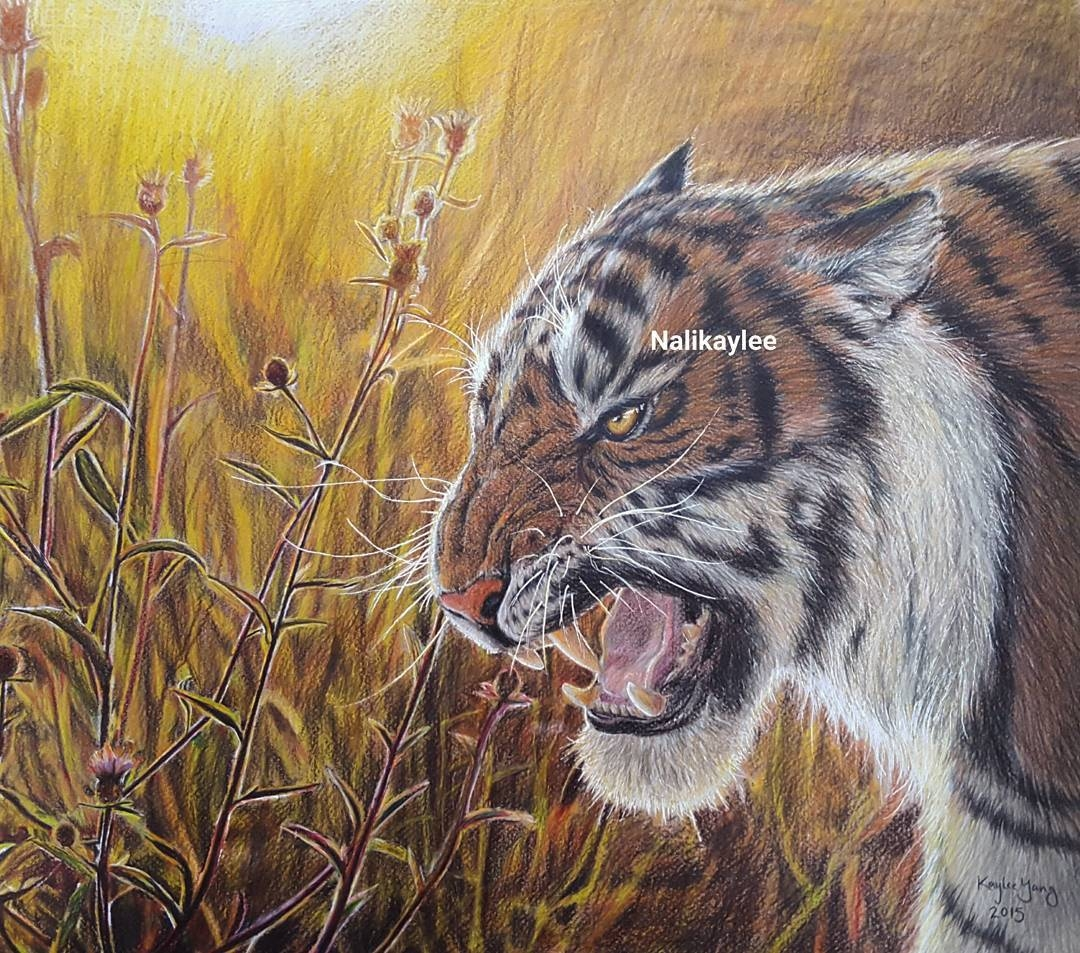 10-Tiger-Kaylee-Yang-nalikaylee-Realistic-Drawings-which-Include-Animals-and-Objects-www-designstack-co