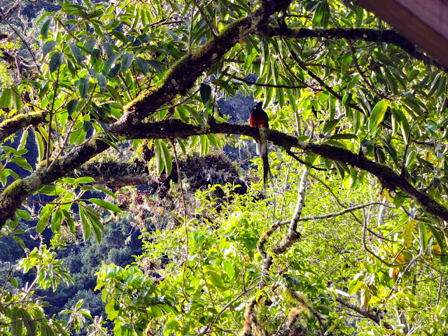 Le Quetzal du Costa Rica