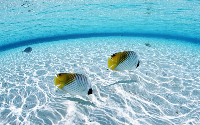 Beautiful-Amazing-Wallpaper-Fish-Underwater-On-The-Sea