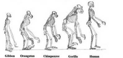 Filogenia, rama de la biologia