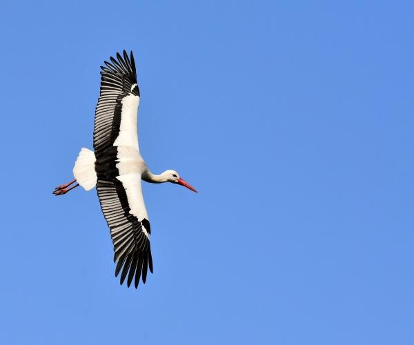 http://www.bioorbis.org/2019/02/como-passaros-voam-altas-altitudes.html