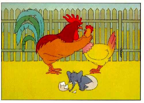 Funny Chicken Cartoons: Laugh Or Smlie: Funny Hen And Cock Cartoon
