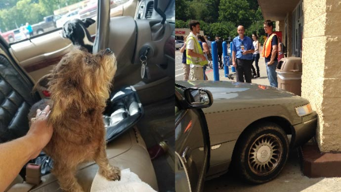 Dog drives parked car into a building after owner left engine running